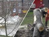 Oude bomen tegen de vlakte in het centrum van Zwolle