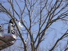 Brandweer haalt dode zwaan uit boom in Bunschoten