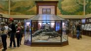 Hernieuwd Africamuseum heropend na vijf jaar sluiting