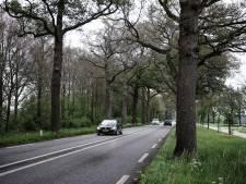 Kaalgevreten bomen in de Achterhoek: 'Het lijkt wel herfst'