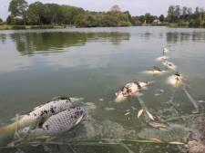 Gemeente laat dode vissen in Terneuzense vijver liggen: 'We werken volgens een tropenrooster'