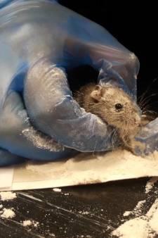 Man zet val voor muisje, krijgt medelijden en belt dierenambulance