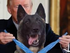 Ik heb me voorgesteld hoe Trump de herdershond uit Best ontvangt in het Witte Huis