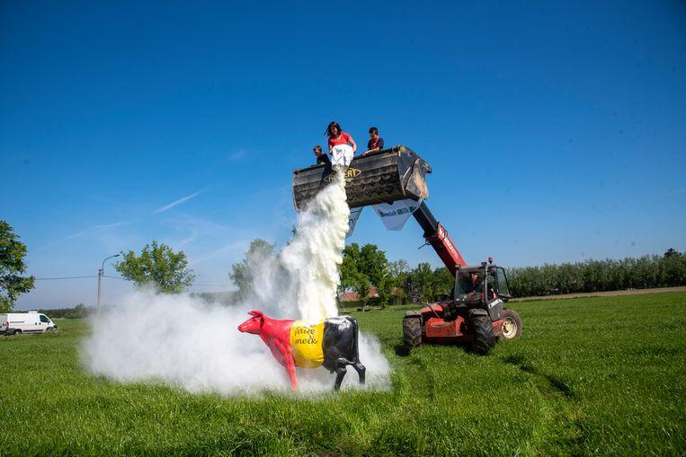 Uit protest tegen de melkoverschotten wordt 25 kilo melkpoeder uitgestrooid op een veld in Laarne.