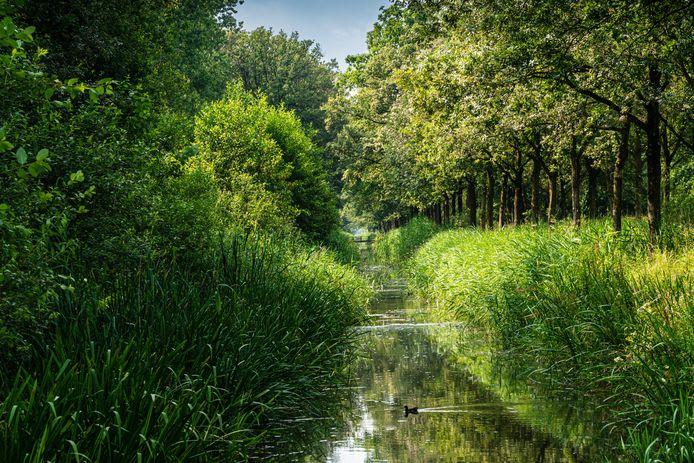 Natuurgebied Wijboschbroek is in beeld voor windturbines. Een werkgroep met 21 leden verzet zich hier fel tegen: Handen af van Wijbosbroek.