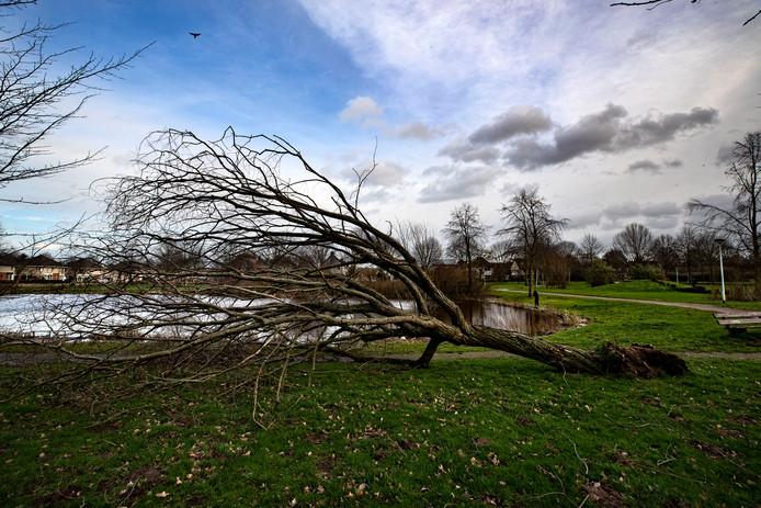 Stormschade in het Heiakkerpark in Deurne.