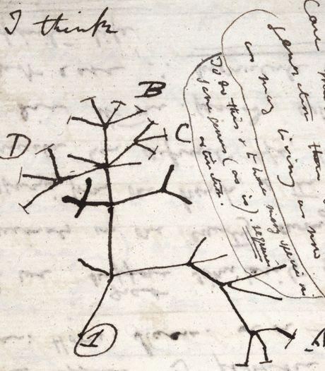 """Deux précieux carnets de Darwin """"volés"""": appel à l'aide de l'université de Cambridge"""