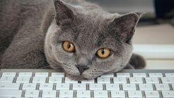 Antistresstip: neem je kat mee naar het werk