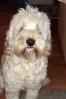 Hondje Giulia maakt het leven van Iena (58) uit Middelburg draaglijk na mishandeling