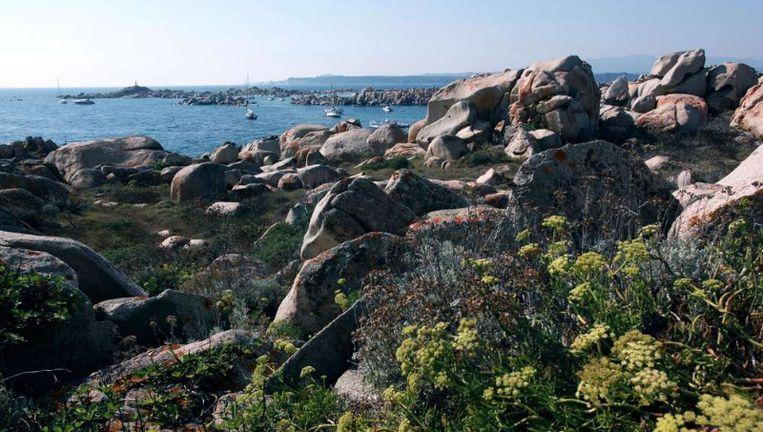 Corsica: mooie natuur, omdat er op veel plekken nauwelijks economische activiteiten zijn en de natuur dus zijn gang kan gaan. ©AFP Beeld