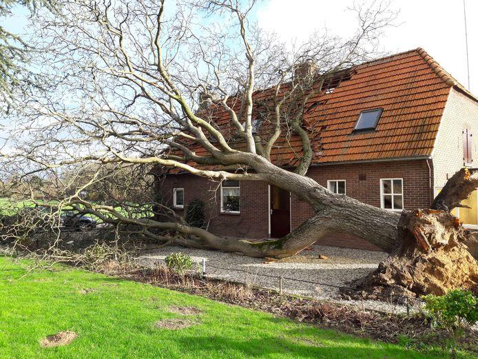 In de kern Breedeweg is een boom op een huis gevallen.  Foto Joop Verstraaten