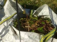 'Oppassen met afval van de duizendknoop'