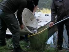 Honderden vissen van Daniel den Hoed verhuisd naar Erasmus MC