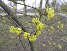 Run op gratis boompjes als 'groene airco' voor versteende wijken in Arnhem