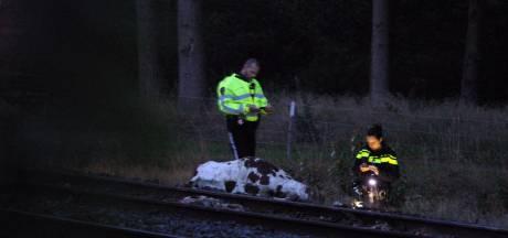 Meerdere koeien dood na botsing met trein tussen Wierden en Rijssen