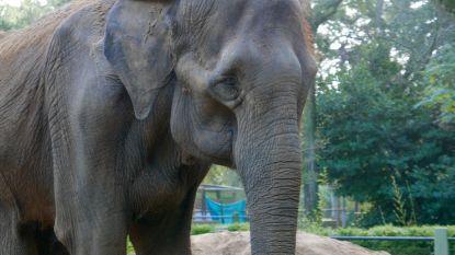50 jaar lang zat deze olifant helemaal alleen in een zoo, nu mag ze naar natuurreservaat