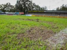Dit beestje verpest het voetbalveld: 'Hier kan niet meer op gespeeld worden'