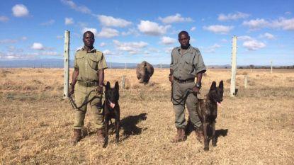 Maak kennis met de honden op de frontlijn van de anti-stroperij