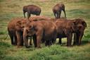 Geredde olifanten in een opvang.