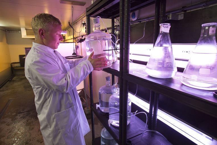 Bioloog Jos Smallegange werkt in het lab van Smit & Smit. Beeld Arie Kievit