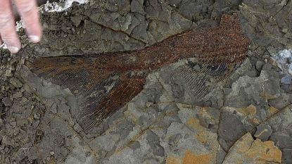 Uniek: fossielen tonen dé fatale dag van de meteorieteninslag die dino's deed uitsterven