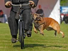 PvdD kaart mishandeling van politiehonden aan