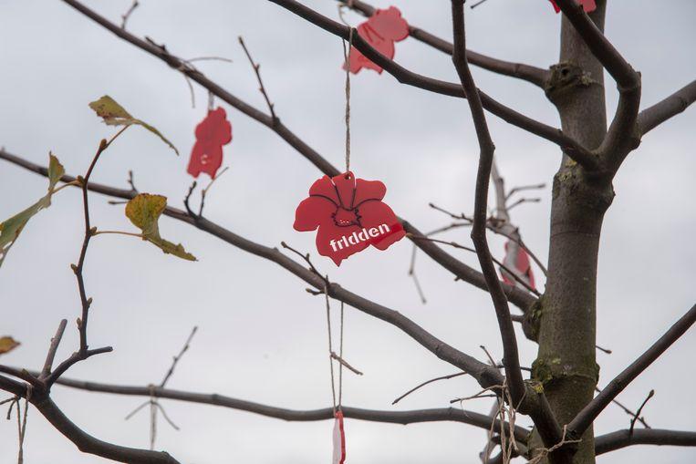 Poppies in de vredesbomen op het kerkhof van Heusden.