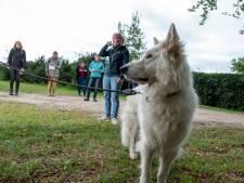 Alpaca's aaien, konijnen knuffelen: werkt dat écht als therapie?