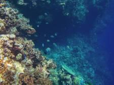 Idée sortie avec les enfants pendant la Toussaint: une plongée dans les abysses à Nausicaa