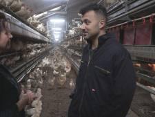 Eus bezoekt pluimveehoudster in Haarle: 'Jullie zullen het nooit eens worden'