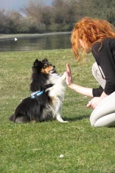 Luca uit Westkapelle uitgeroepen tot mooiste hond van Zeeland