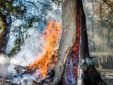 Holle boom in brand in bos Son en Breugel: 'Een apart gezicht'