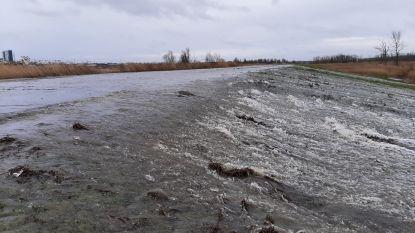 Polders van Kruibeke overstromen bij springtij