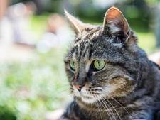 Komt er een verplichte bedenktijd bij aanschaf van huisdieren?