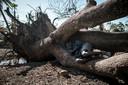 Een man heeft een slaapplek gevonden in een omgevallen boom.