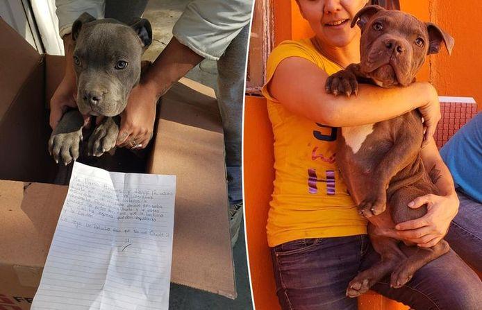 Le jeune pitbull, qui s'appelle désormais René, devrait être rapidement adopté par une nouvelle famille.