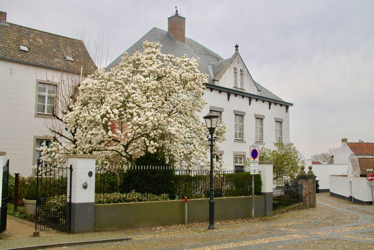 Witte bloesem in Thorn Beeld Van Doorn Flip