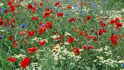 Peltenaren krijgen gratis bloemenzaad