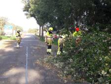 Omgewaaide boom hindert verkeer Koningin Wilhelminaweg in Groesbeek