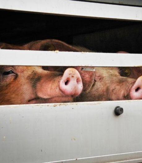 Boze buurvrouw klaagt bij Raad van State over stofwolken bij Wehls varkensbedrijf: 'Stik er maar in, zeggen ze'
