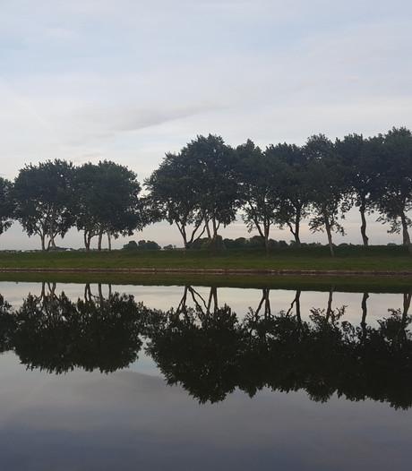 'Abelen langs Kanaal door Walcheren kunnen best per rij worden gekapt'