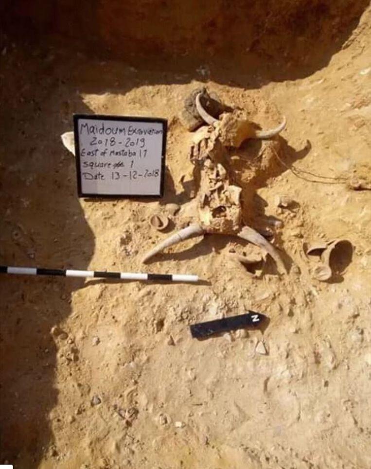 Er werden in de graftombe ook dierenhoofden teruggevonden, vermoedelijk zijn die afkomstig van stieren.