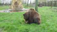 Al meer dan 6.000 euro ingezameld voor dierenopvangcentrum De Zonnegloed