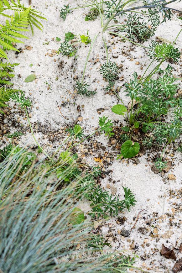 Een vlak stukje zand is leuk, maar een duinpan met reliëf is zoveel spannender