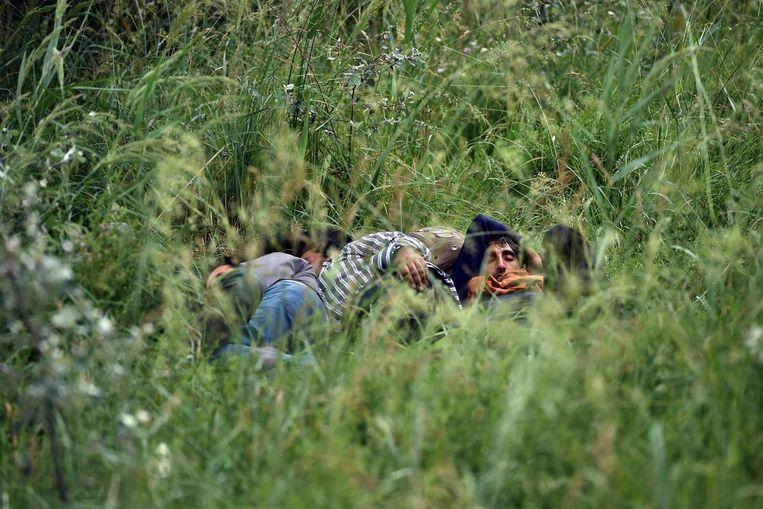 Illegale immigranten rusten uit in het gras bij een verlaten steenfabriek in de buurt van de noordelijke Servische stad Subotica. Beeld afp