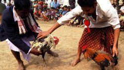 Indiër (55) overleeft hanengevecht niet