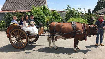 Vier jaar na haar deelname aan 'Boer zkt. vrouw' is boerin Kelly getrouwd