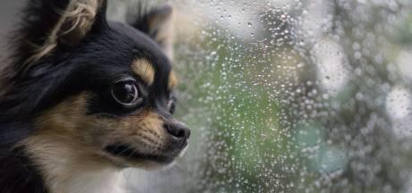 """Un chien périt dans une voiture étouffante: """"Une fenêtre entrouverte n'a aucun effet, par ces températures"""""""