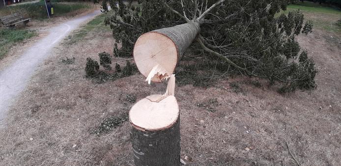 De gemeente heeft melding gemaakt bij de politie van de bomenvernieling.