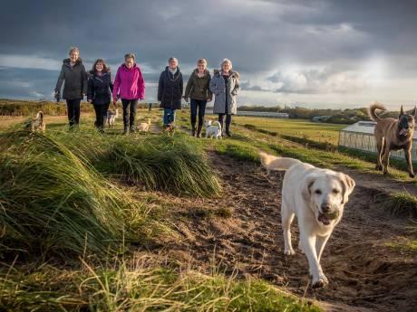 'Hondendijk moet beter onderhouden'